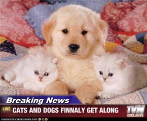 Breaking News - CATS AND DOGS FINNALY GET ALONG
