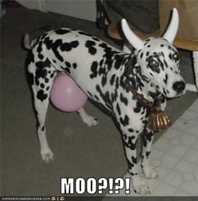 MOO?!?!