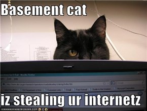 Basement cat  iz stealing ur internetz