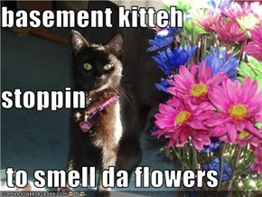 basement kitteh stoppin  to smell da flowers