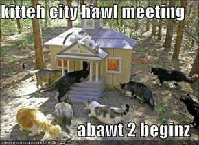 kitteh city hawl meeting  abawt 2 beginz