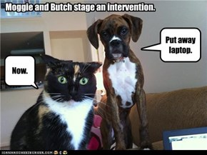 Moggie and Butch stage an intervention.