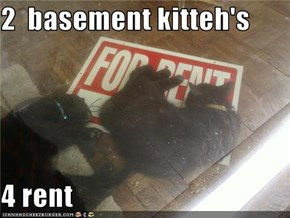 2  basement kitteh's  4 rent