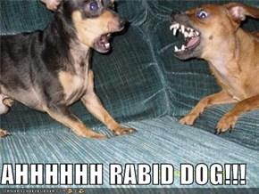 AHHHHHH RABID DOG!!!