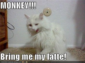 MONKEY!!!  Bring me my latte!
