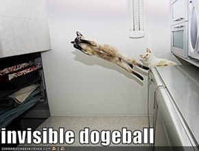 invisible dogeball
