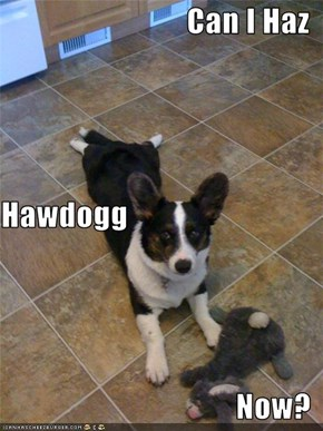 Can I Haz Hawdogg Now?