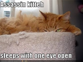 Assassin kitteh  sleeps with one eye open