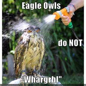 "Eagle Owls do NOT      ""Whargrbl"""