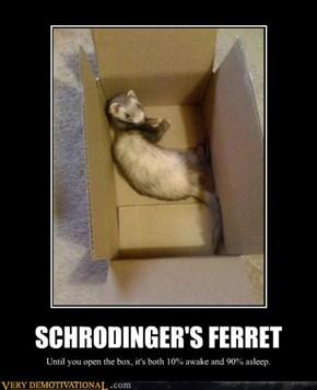 SCHRODINGER'S FERRET
