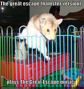 The great escape (hamster version)  *plays The Great Escape music*