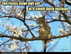 teh roses nawt owt yet -