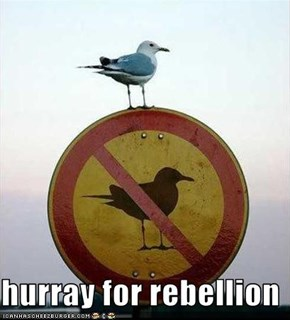 hurray for rebellion