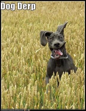 Dog Derp