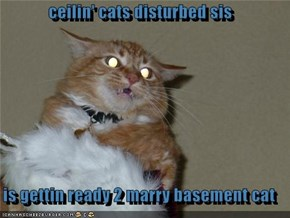 ceilin' cats disturbed sis  is gettin ready 2 marry basement cat