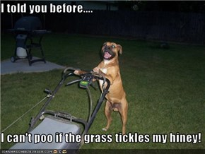 I told you before....  I can't poo if the grass tickles my hiney!
