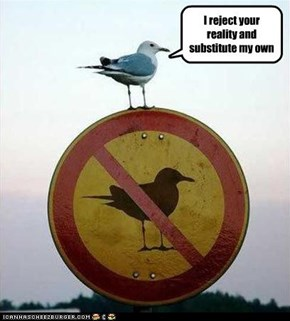 Even birds like Mythbusters
