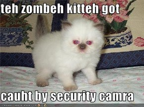 teh zombeh kitteh got  cauht by security camra
