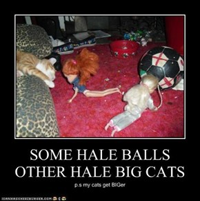 SOME HALE BALLS OTHER HALE BIG CATS