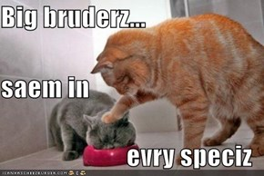 Big bruderz... saem in evry speciz