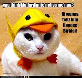 you think Mallard mite notiss me nao?