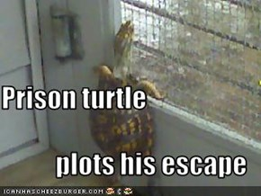 Prison turtle plots his escape