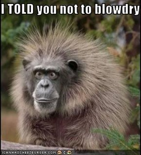 I TOLD you not to blowdry