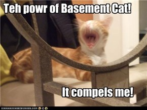 Basement Cat Possession!