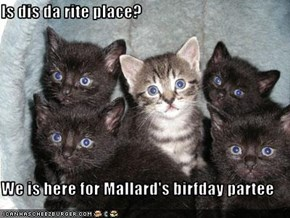 Is dis da rite place?  We is here for Mallard's birfday partee