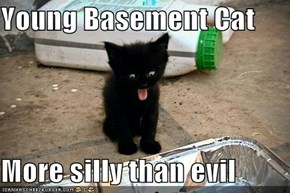 Young Basement Cat  More silly than evil