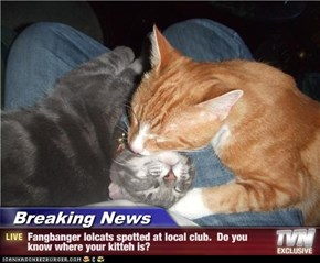 Breaking News - Fangbanger lolcats spotted at local club.  Do you know where your kitteh is?