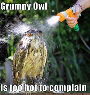 Grumpy Owl  is too hot to complain