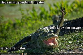 stop raising your hand aligator you don't know the answer you're an aligator