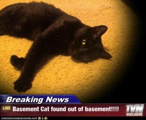 Breaking News - Basement Cat found out of basement!!!!