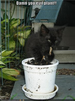 Damn you evil plant!!
