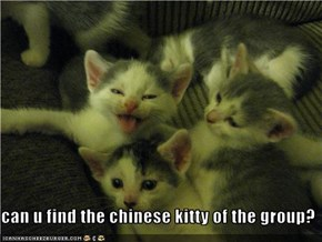 can u find the chinese kitty of the group?