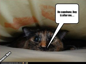 De capshunz r after kitteh. . .