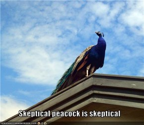 Skeptical peacock is skeptical