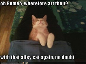 oh Romeo, wherefore art thou?  with that alley cat again, no doubt