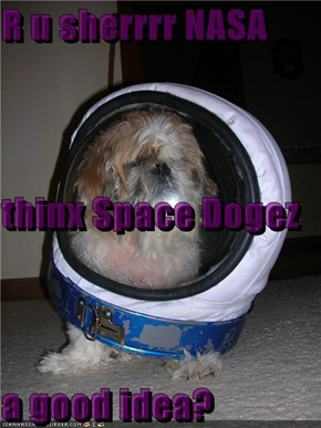 R u sherrrr NASA thinx Space Dogez a good idea?
