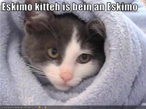 Eskimo kitteh is bein an Eskimo
