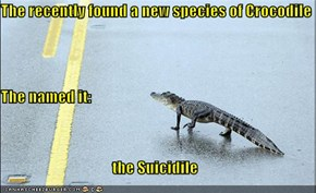 The recently found a new species of Crocodile The named it: the Suicidile