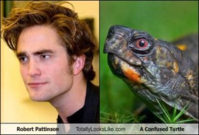 Robert Pattinson Totally Looks Like A Confused Turtle
