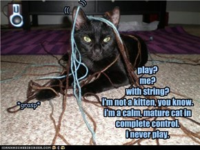 play? me?  with string? i'm not a kitten, you know. i'm a calm, mature cat in complete control. i never play.