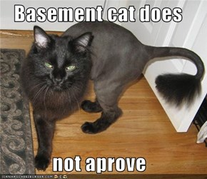 Basement cat does   not aprove