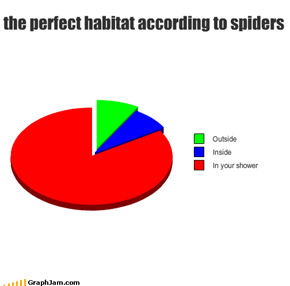the perfect habitat according to spiders