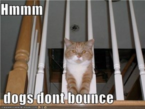 Hmmm   dogs dont bounce