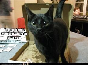Basement cat iz wonderin' where da pizza went