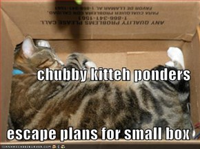 chubby kitteh ponders escape plans for small box