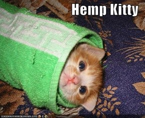Hemp Kitty